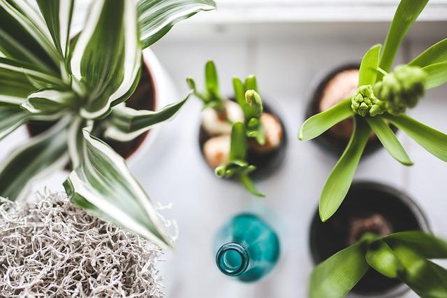 pokojové rostliny u láhve